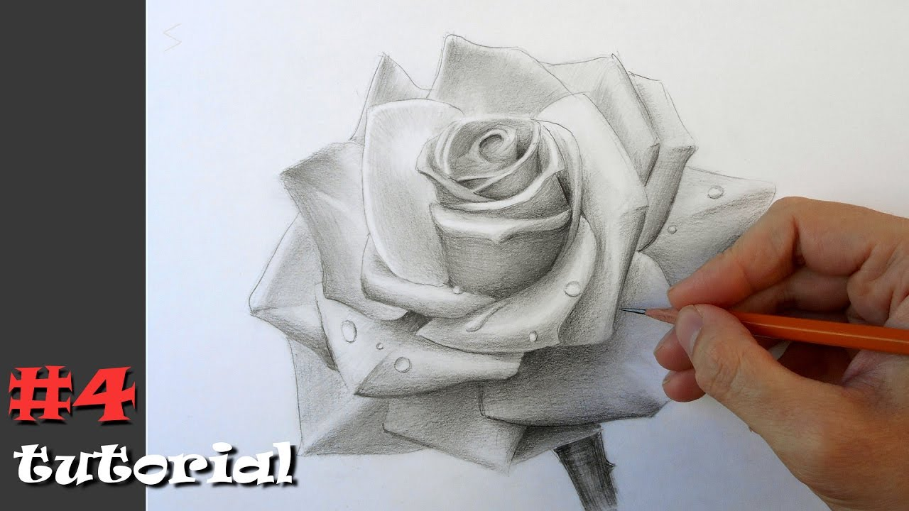 роза карандашом