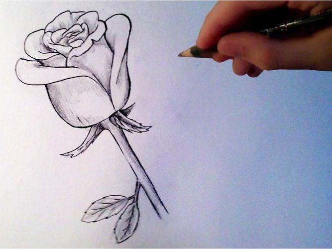 красиво рисовать розы