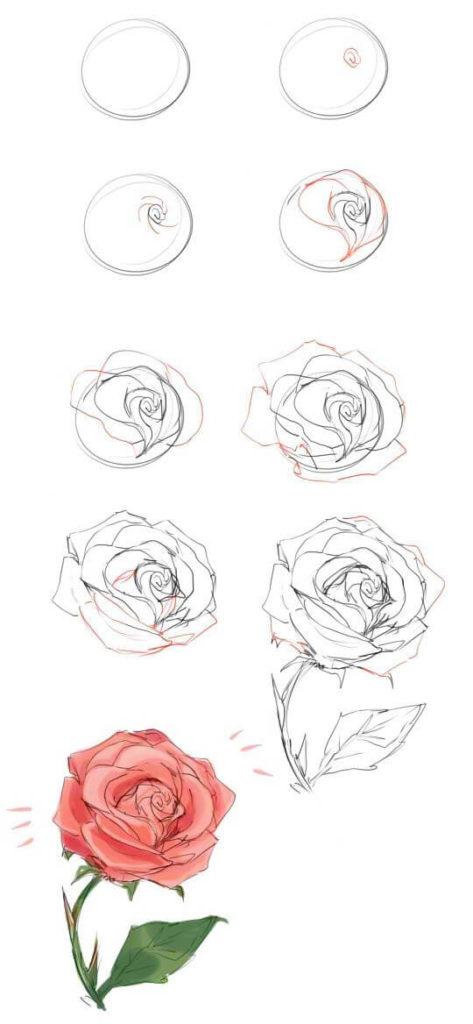 как рисовать розу для начинающих