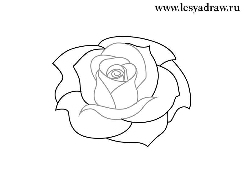 научиться рисовать розу поэтапно