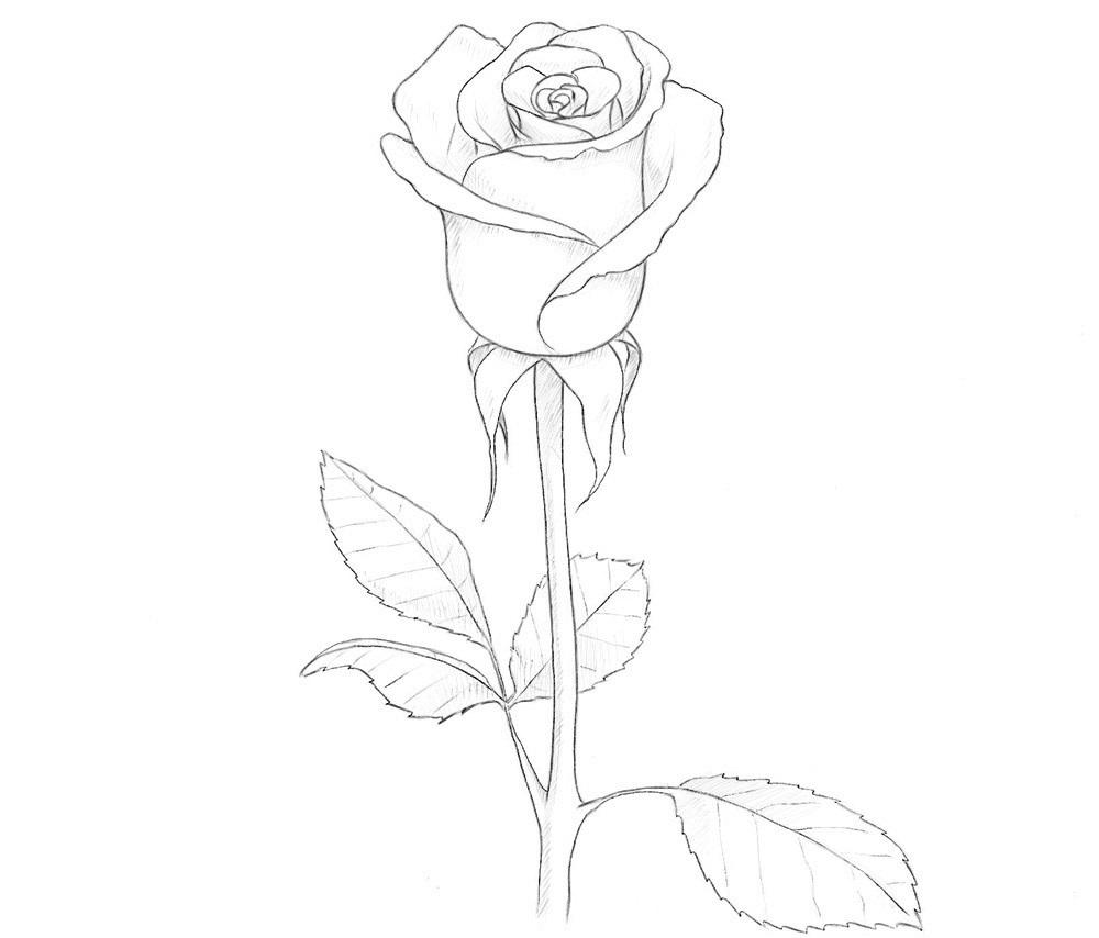 как рисовать розу легко