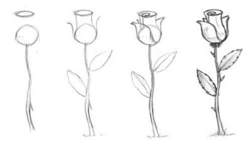 как рисовать розы карандашом для начинающих