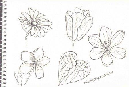 рисуем цветы для начинающих