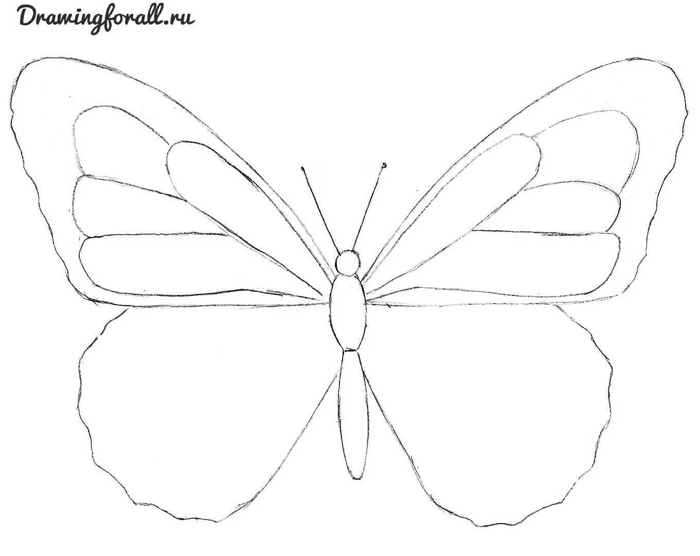 бабочка поэтапно