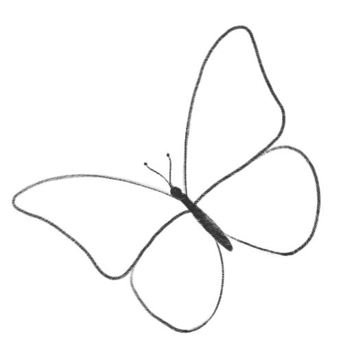бабочка карандашом