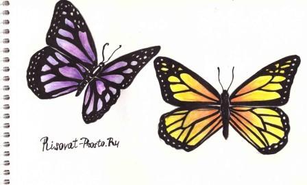 как нарисовать бабочку пошагово