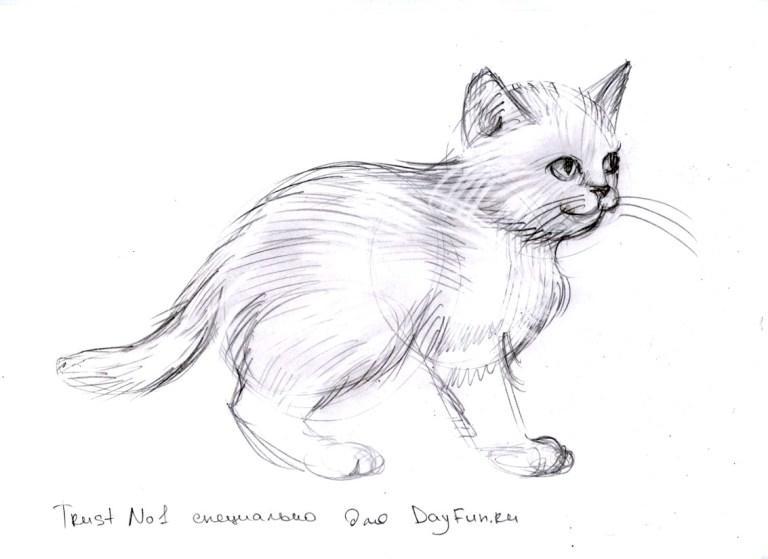 как нарисовать кота карандашом