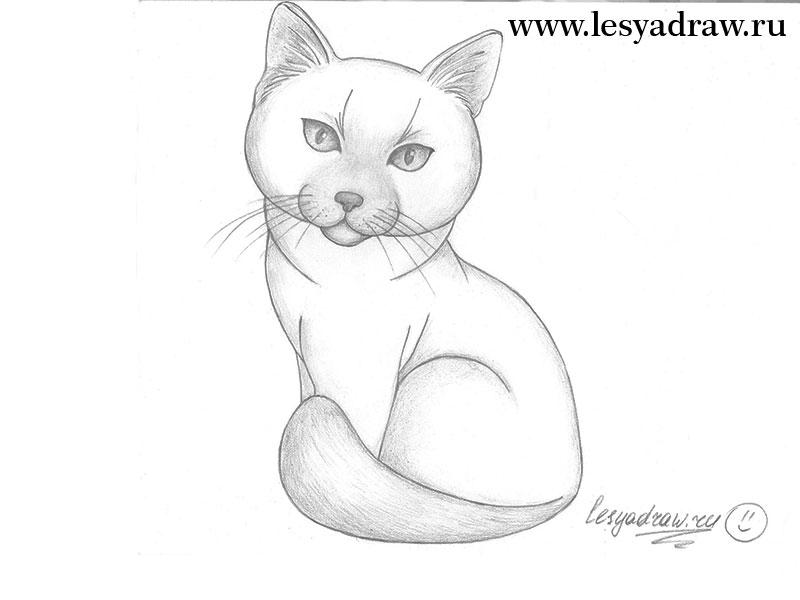 кошка карандашом поэтапно
