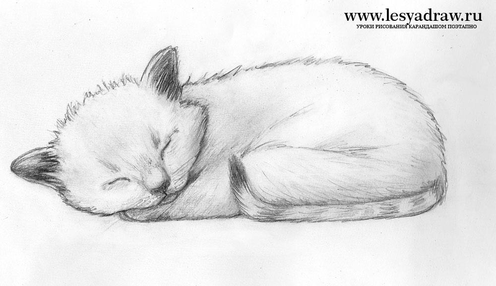 как рисовать кота карандашом поэтапно