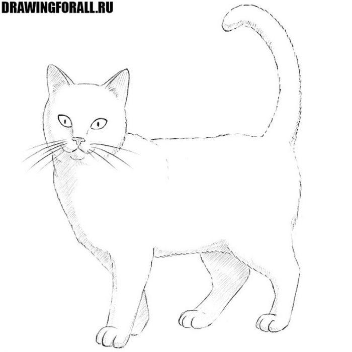 рисовать кота детей
