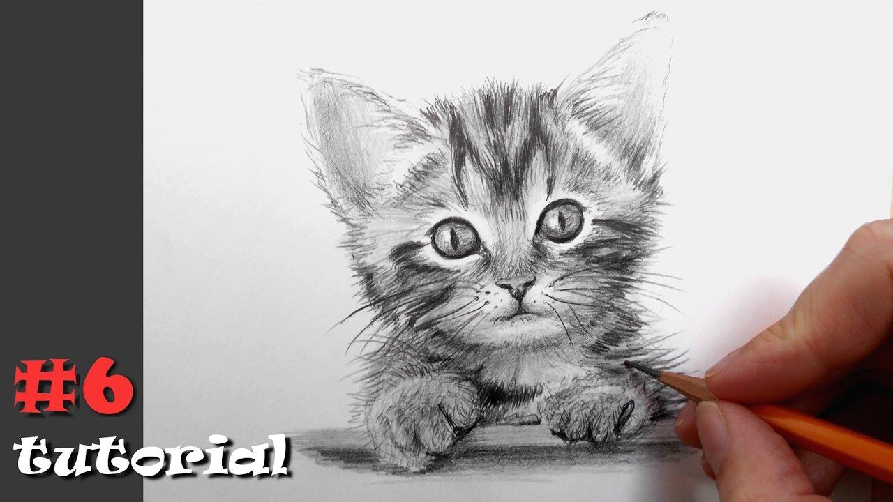 рисуем кота поэтапно карандашом для начинающих