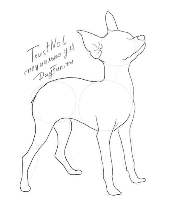 как нарисовать той терьера поэтапно карандашом