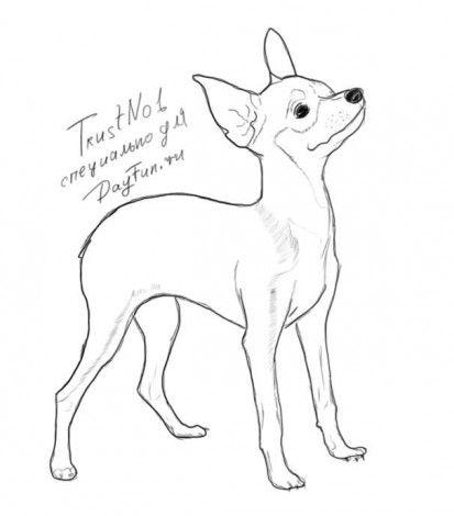 нарисовать собаку терьера поэтапно карандашом