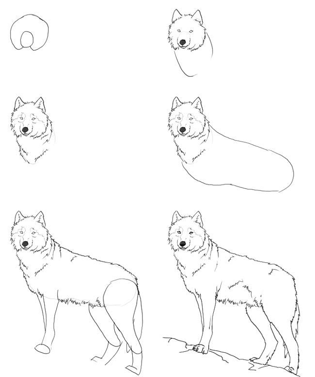 волк поэтапно