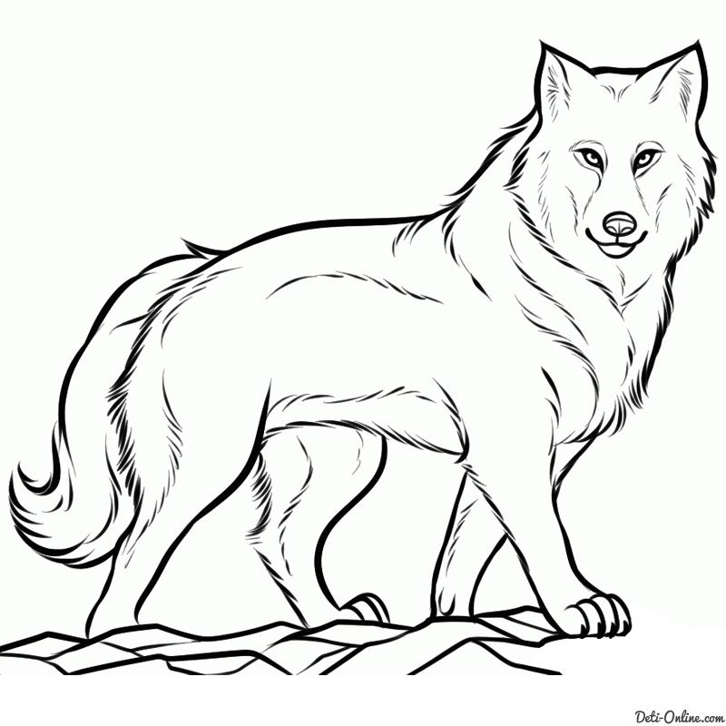 как нарисовать серого волка