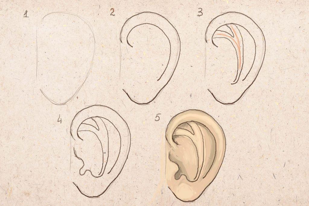 нарисовать ухо человека поэтапно