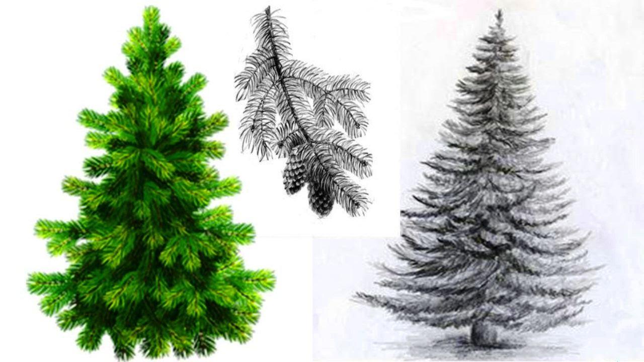 нарисовать елку карандашом