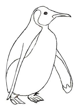 Как нарисовать пингвина карандашом