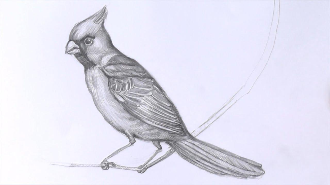 рисуем птицу поэтапно