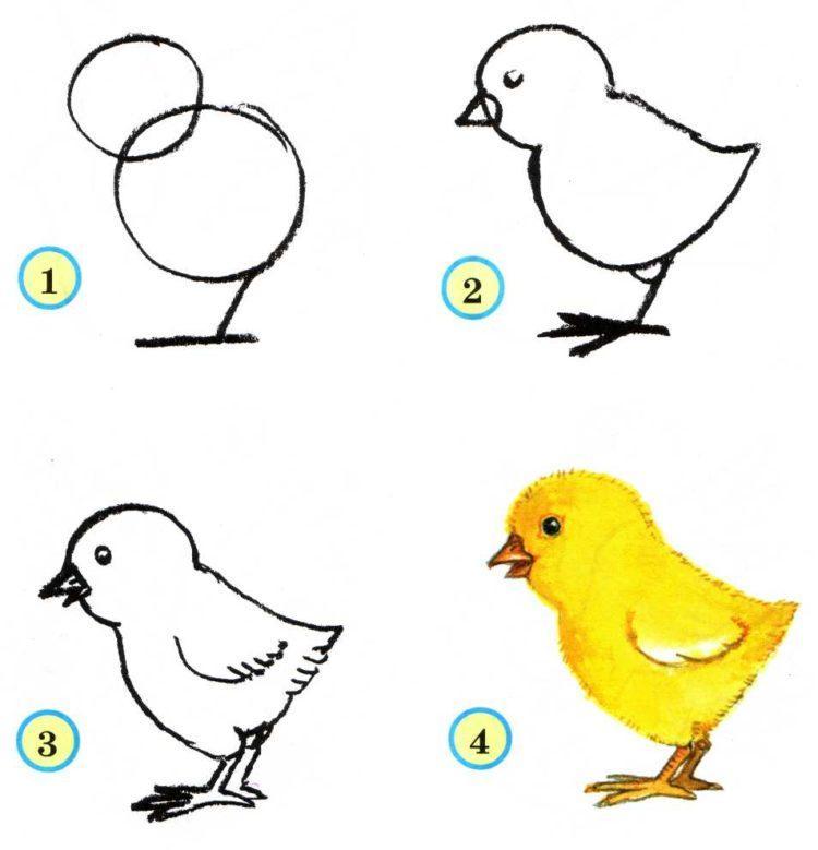 как нарисовать птицу пошагово