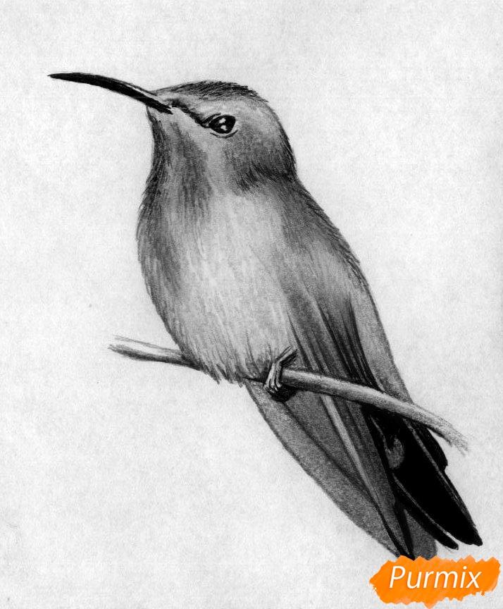 рисуем птицу карандашом