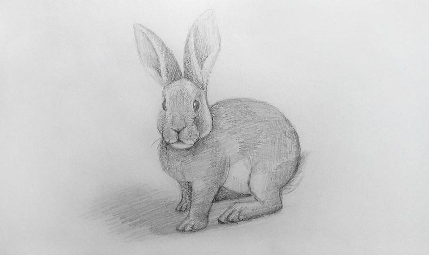 нарисованный кролик карандашем
