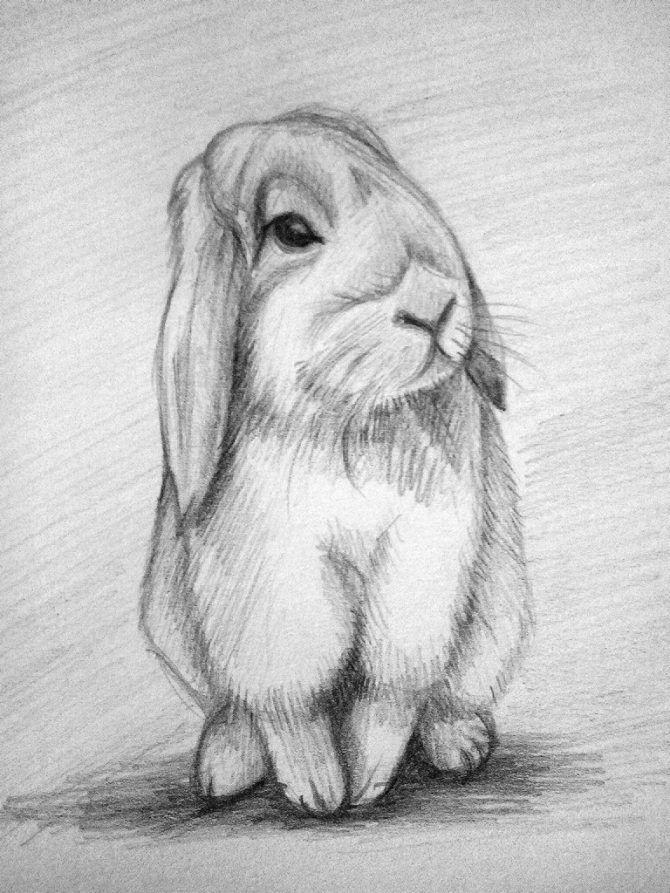 нарисованный карандашем кролик
