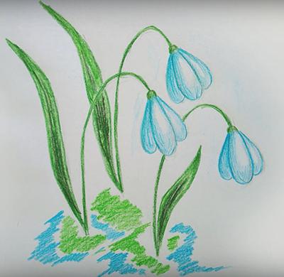 Как нарисовать подснежник карандашом