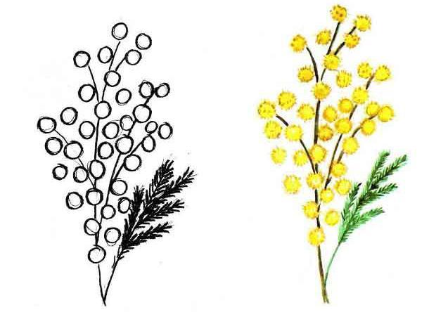 Как нарисовать ветку мимозы